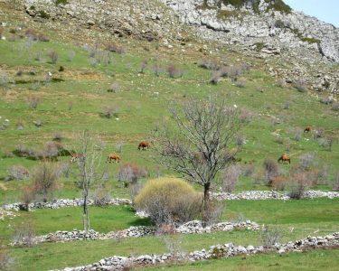 Pastos del cordel de las merinas-ruta pastores trashumantes de merinas-Las hidalgas